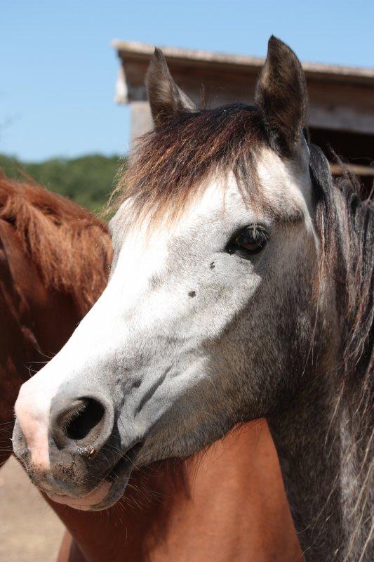 Mes poneys préférés des écuries