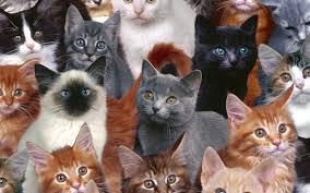 cherche ton chat préféré