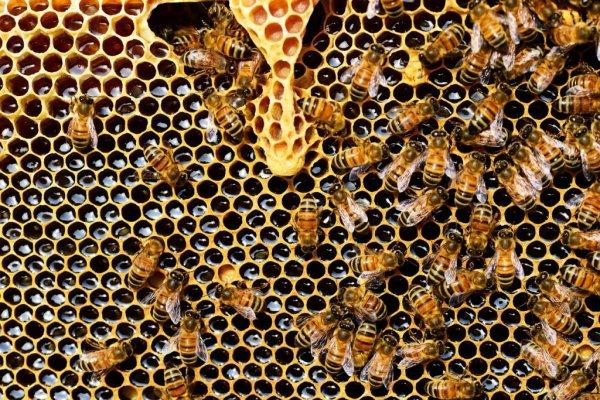 Trois quart du miel est contaminé par des pesticides...