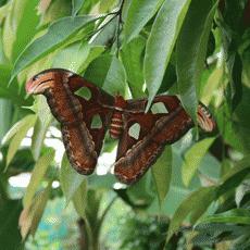 L'Île Aux Papillons