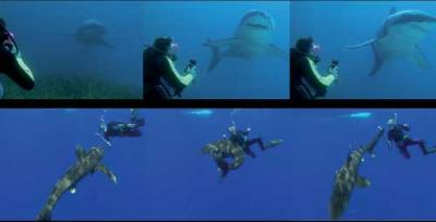 Les moyens de protections contre les requins