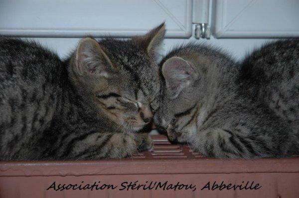 Les frères et soeurs se font de gros câlins sur le radiateur bien chaud  :D ♥