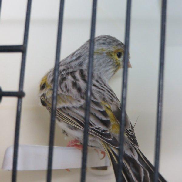 oiseaux 2013 agate mosaique jaune + pastel