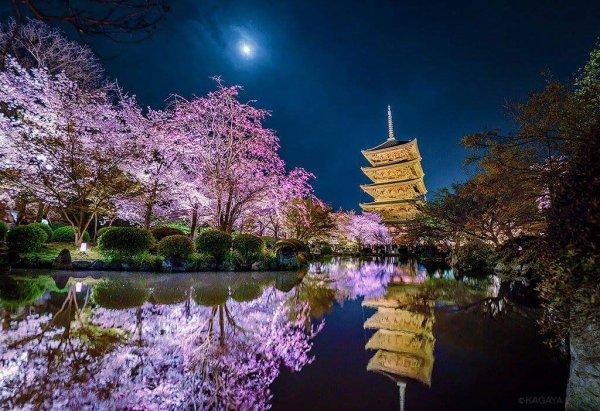 Sakura *^* <3