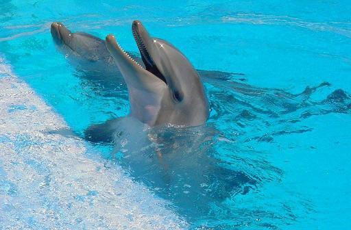 {¯`*•. ♀ .-**- ♪ le dauphin ♪ -**-. ♀ ..•*'¯}