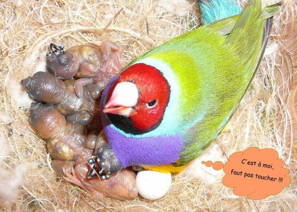 nouvelles naissances