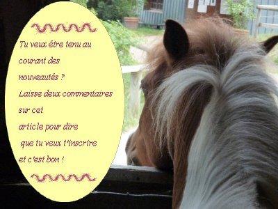 News Letter !     « Le cheval est pour l'Homme comme les ailes pour l'oiseau. »