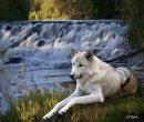 Photo de wolfeen83