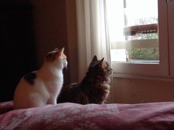 Presque copines maintenant! Circé 6 mois et Mia 24 mois rescapée de la rue. Ensemble pour regarder les mésanges à la fenêtre!