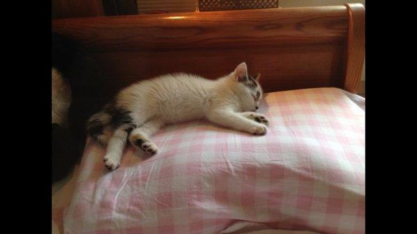 Monsieur Milo à la sieste!