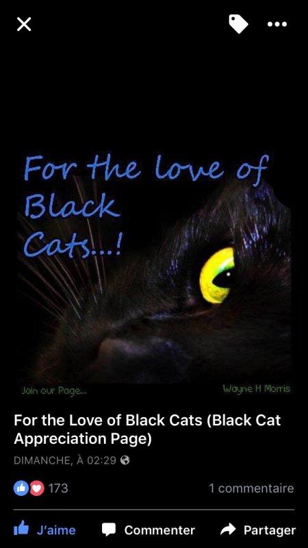 Pour l'amour des Chats noirs! Journée de sensibilisation internationale aux Chats noirs