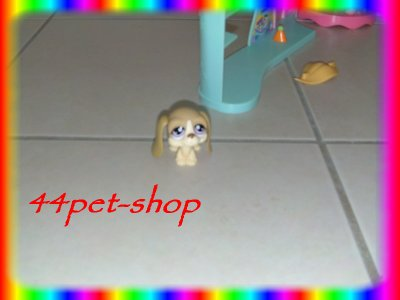 Mes nouveau pet shop