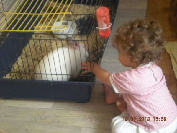 ma puce ki essaye de carresser le lapin