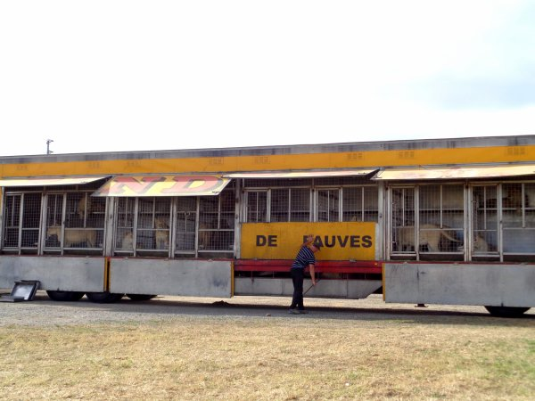 REPORTAGE SUR LE CIRQUE PINDER AUX SABLES D'OLONNE EN 2016... LES ANIMAUX (1)