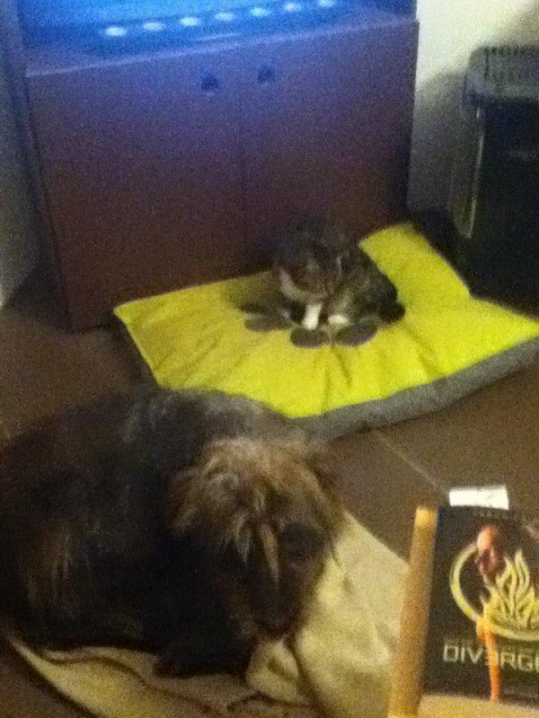 Le chat à la place du chien ! N'importe quoi !!!