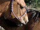 Photo de Horseriding-store