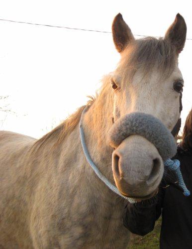 Shop' Horses_