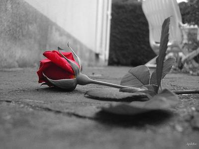 Je t'aime, si fort que les murs en tremblent, si fort que les falaises s'affaissent, Je t'aime énormément, mais tu ne le comprend toujours pas après tout ce temps. ♥