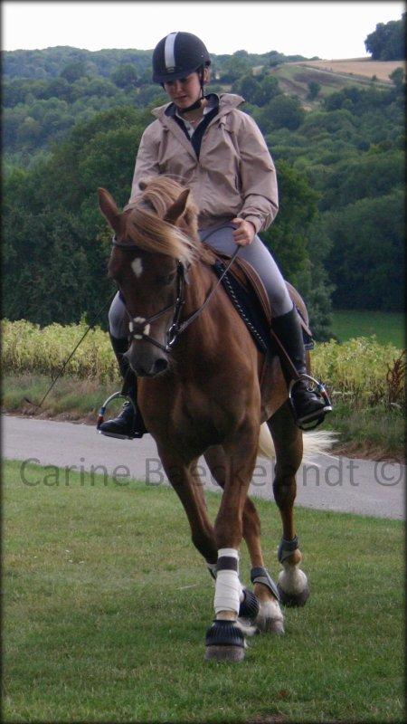 """"""" Faites du cheval un compagnon et non un esclave, vous verrez quel ami extraordinaire il est. """" Nuno Oliveira"""