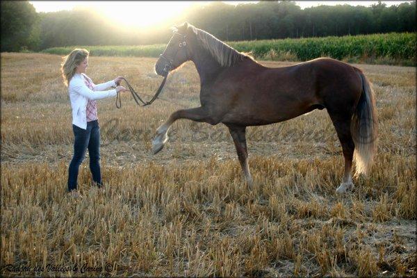 """Regarde un cavalier sans son cheval, il lui manque la moitié de lui."""