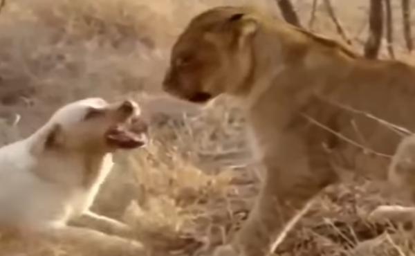 T'essaies de M' intimider avec tes menaces à la con mais une Lionne ne craint pas les aboiements d'une chienne !