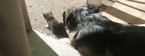 Mon Djim et mon petit Balou