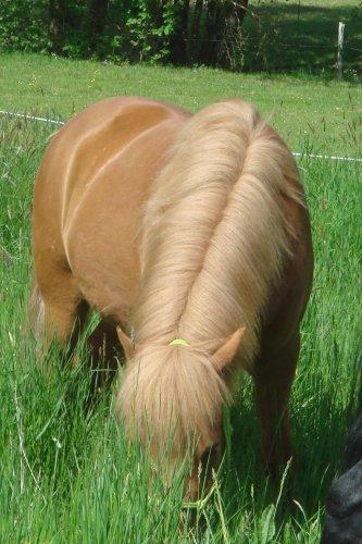 3 poneys extraordinaires .. :$$ ♥