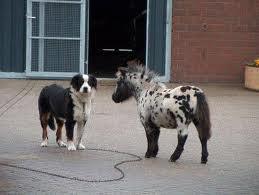 le plus petit cheval/poney du monde
