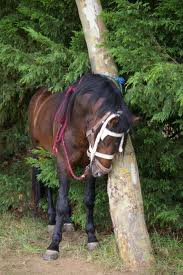 voici la photo de mon cheval NUTTELA quand j'etait a Istres