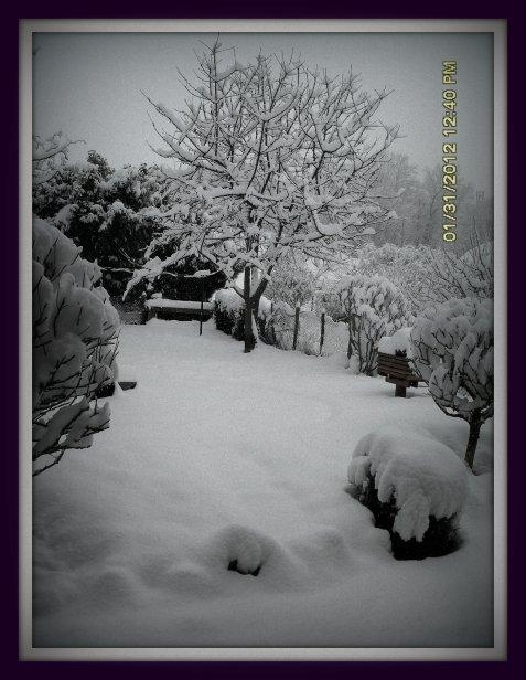 Journée sous la neige photo prise depuis ma fenêtre