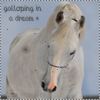 Galloping-in-a-Dream