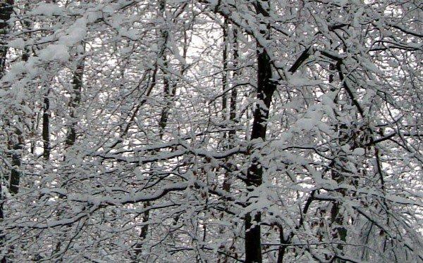 neige précoce