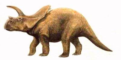 Arrhinocératops