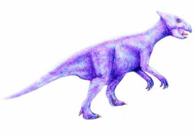 Liaocératops