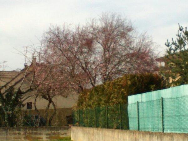 Vive le printemps .hihi