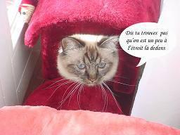 Chaton Humour. Images comiques de chatons mignons, photos droles ...