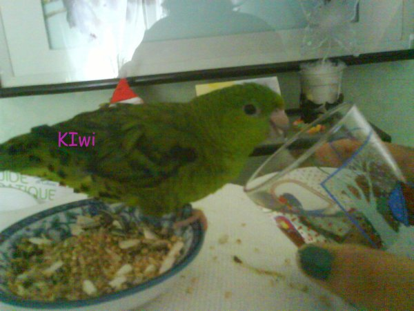 Bonne apétit Kiwi