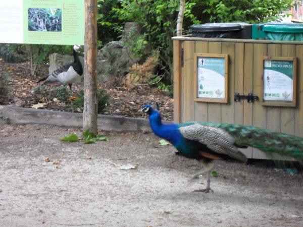 Sortie au Zoo et Lille