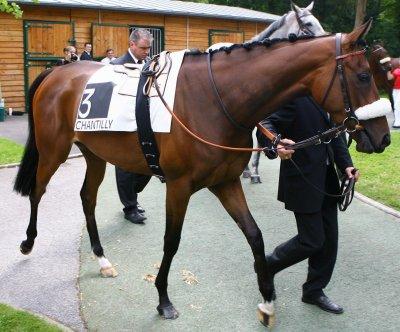 je vais avoir / ou peut etre avoir un cheval de course reformer qui est entra&iner pour tous (le saut ...) mais de toute facon je l'essayerai avant  de l'acheter et et je le choisirai !( hors sujet du blog mais voila , je voulais vous l'annoncer)les 2 image de chevaux ue j'ai mis ne sont pas les chevaux de course que je vais choisir c juste pour mette des image de chevaux de course ( trop belle la premiere  image !!!)