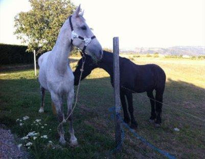"""encore un cheval a sauver """"bonito """" sur le site actu animaux lien sauver un cheval  , faite pareil que sur la jument  angel . !  sa propro ne pe plus le garder car elle nas plus d'argent pour le nouriri et il vas mourir de faim si on ne le sauver pas ! aider le"""
