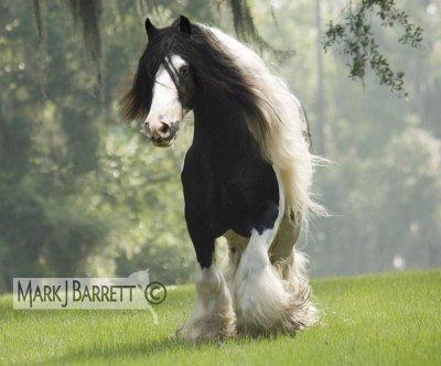 leun cheval meconnu au paravant , le plus bo , le plus mervilleux , revient en force aujourd'hui