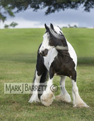 2 ieme poeme sur le irish cob