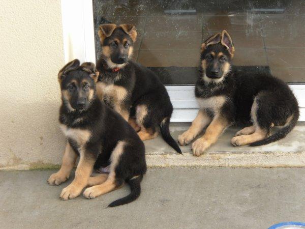 Les 3 fréres =)