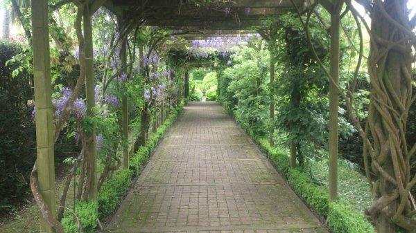 Couloir végétal