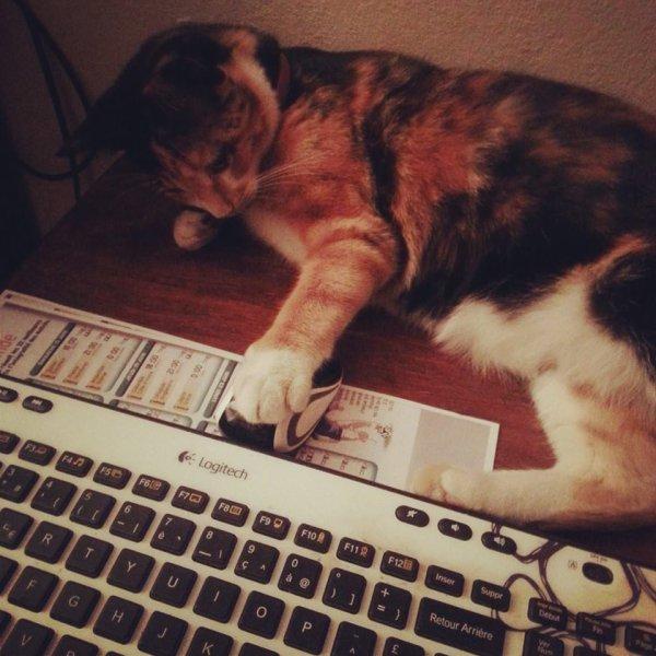 J'peux pas jouer, mon chat veut pas.