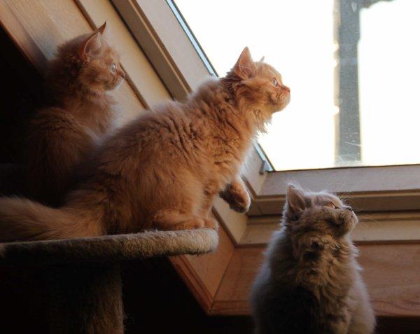 Trois petits amours et une mouche