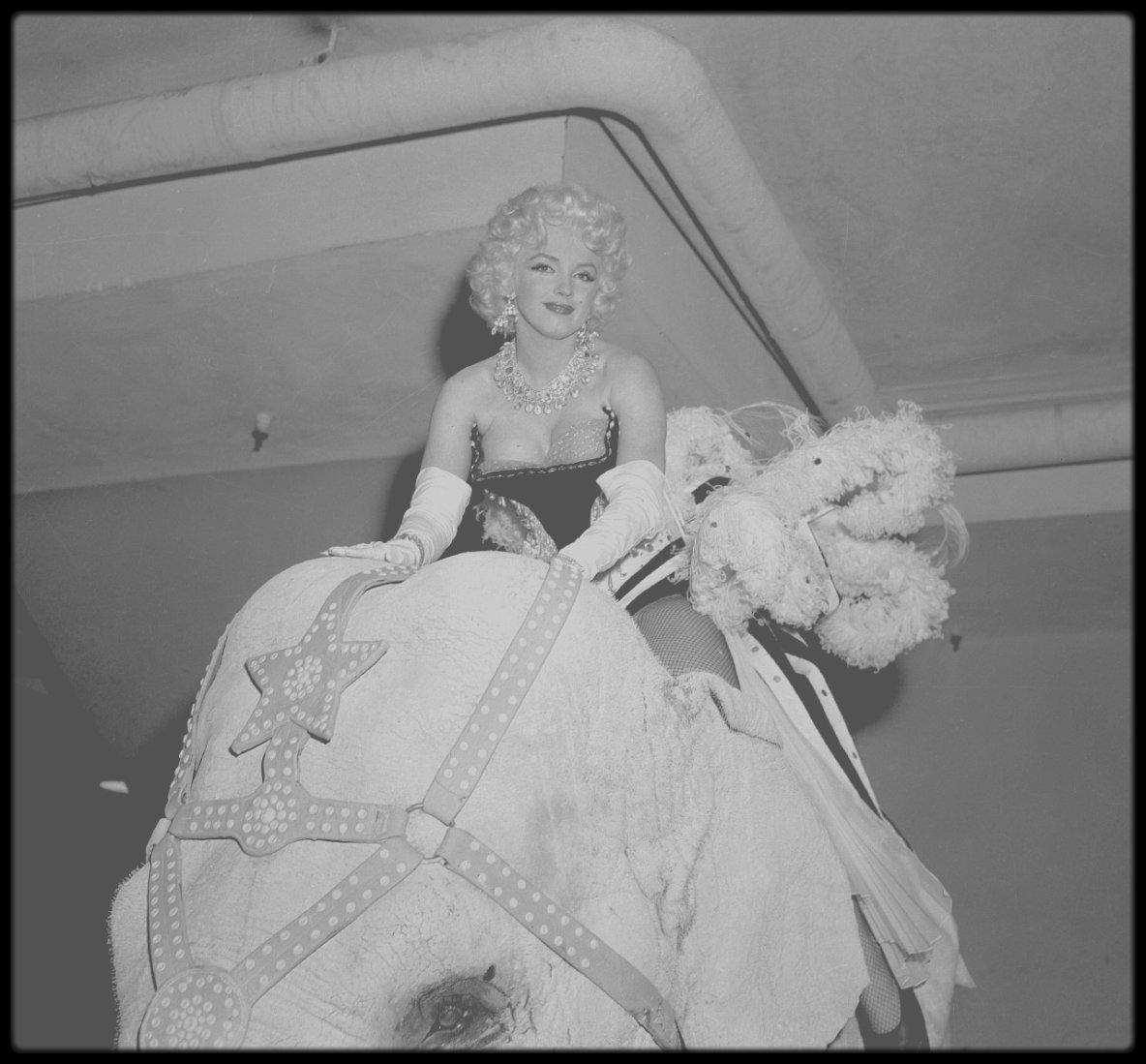 """1955 / Marilyn assiste à la soirée organisée par Mike TODD et le cirque """"Ringling Brothers Circus"""", au """"Madison Square Garden"""", au profit de la Fondation pour l'arthrose et les affections rhumatismales. Elle fait une entrée triomphale vêtue d'un collant très sexy brodé de paillettes et de plumes, sur le dos d'un éléphant peint en  rose, nommé Karnaudi, devant 18 000 personnes. Elle est prise en photo par le photographe Ed FEINGERSH.  C'est Milton BERLE  qui anime la soirée. Milton GREENE est également présent."""