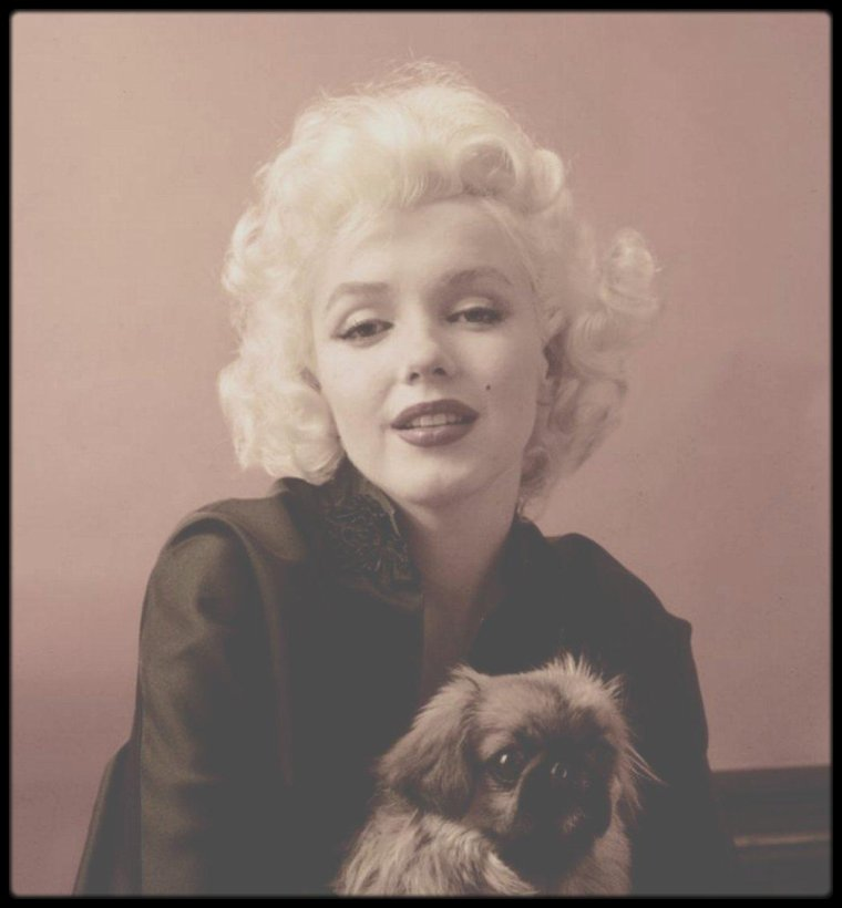 "1953 / Session photos de Marilyn ""aux pékinois"" du photographe Milton GREENE."
