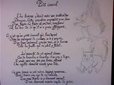 Brouillon : Petit écureuil