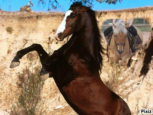 mon cheval <3
